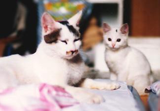 1996年 マロと一代目シロ